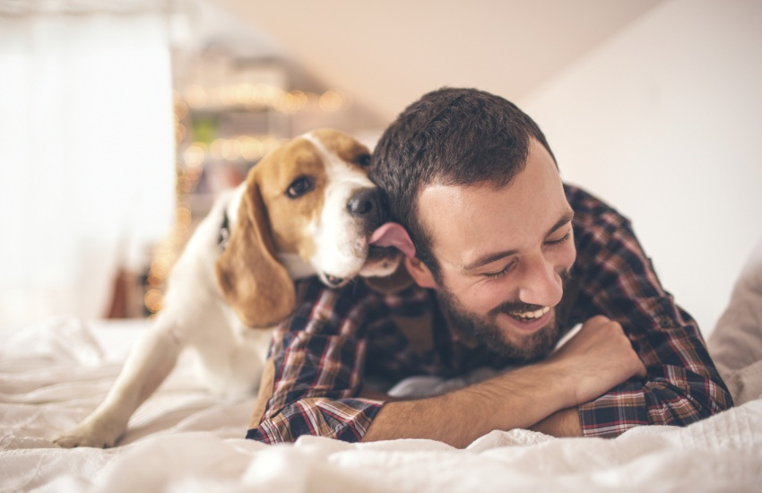 adopción mascota