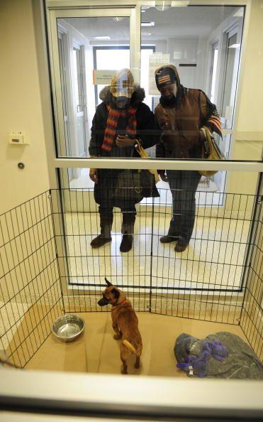 Adoptar un perro de refugio tiene muchas ventajas que a primera vista no...