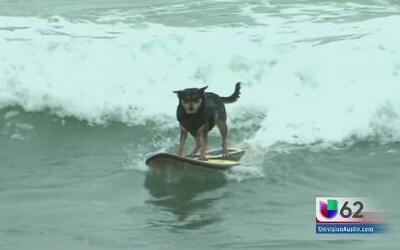 Canes practican el surf por una buena causa