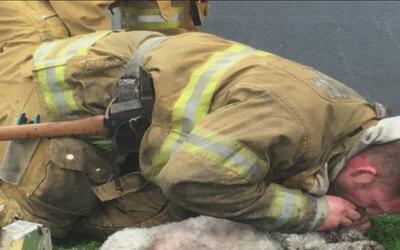 Bomberos de Santa Mónica le salvaron la vida a un perrito con resucitaci...