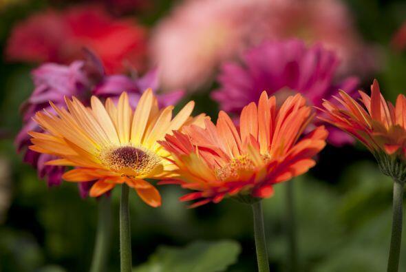 Planifica a largo plazo. Piensa el jardín que quieres tener en el futuro...