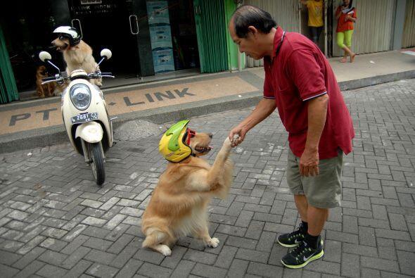 ¡Protección canina ante todo!