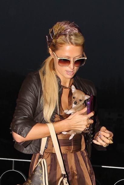 Paris Hilton siempre ha sido famosa por el amor que le tiene a sus masco...