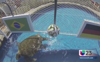 Tortuga predice qué equipo pasará a la final del Mundial