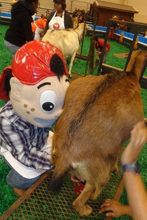A Pepito le tocó ordeñar una cabra, lo hizo bien pero esperemos que a la...