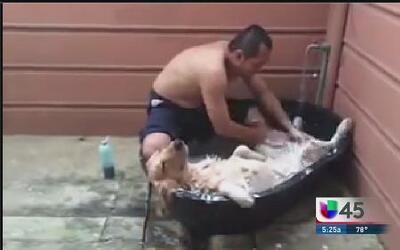 Nadie disfruta un baño más que éste perro