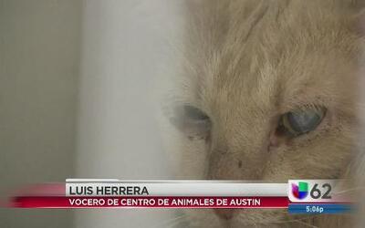 Animales rescatados ante crueldad animal