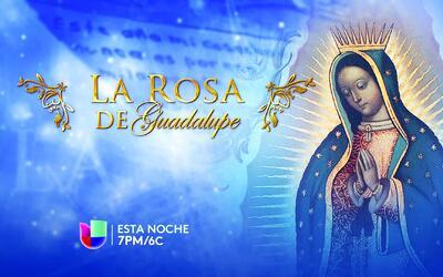 Promo Universal La Rosa de Guadalupe