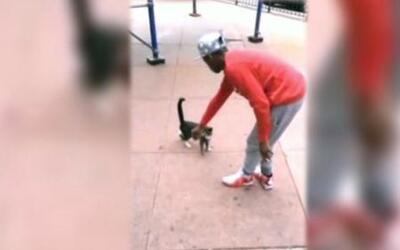 Captado en cámara:  hombre pateó a un gato