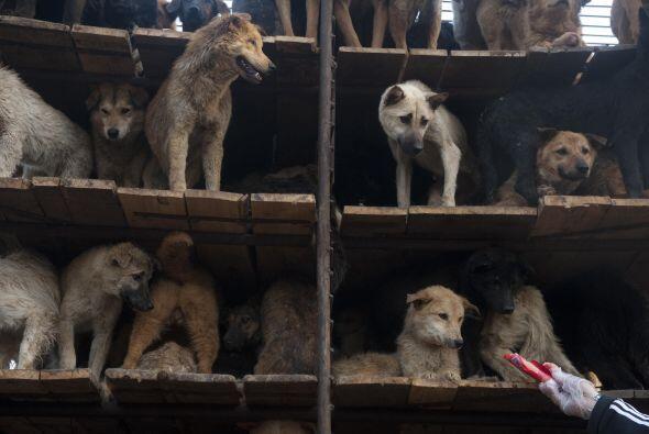El vehículo que transportaba a los perros llevaba una jaula de acero de...