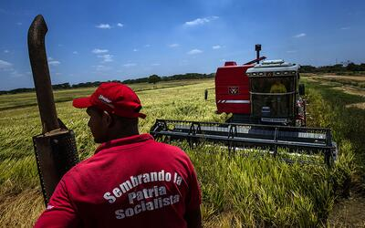 Trabajadores en una plantación de arroz estatal en Guárico.