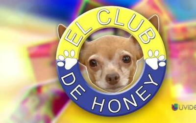 El Club de Honey: Conoce a los amiguitos de Honey