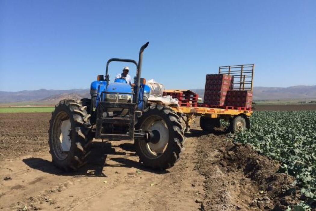 Los tractores transportan el producto, pero la mayoría de las cosechas e...