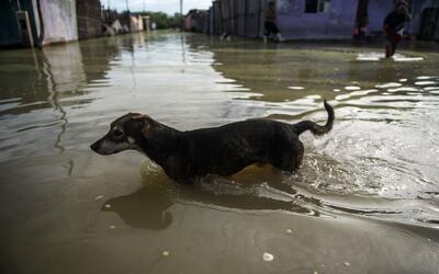 Animales perdidos en las inundaciones de Perú encuentran nuevos hogares