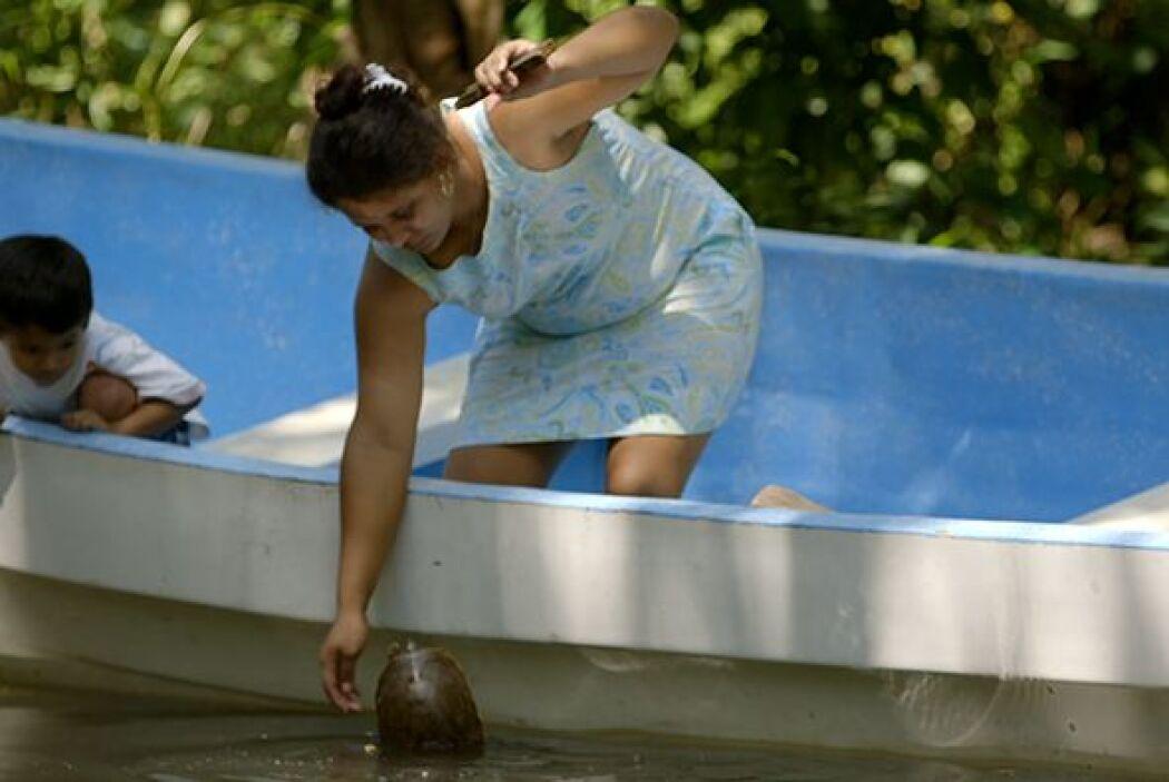 Según Molina López, tanto el aceite como la sangre de las tortugas son m...