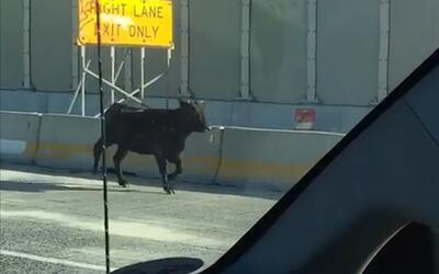 En video: unos días llenos de 'travesuras' de animales