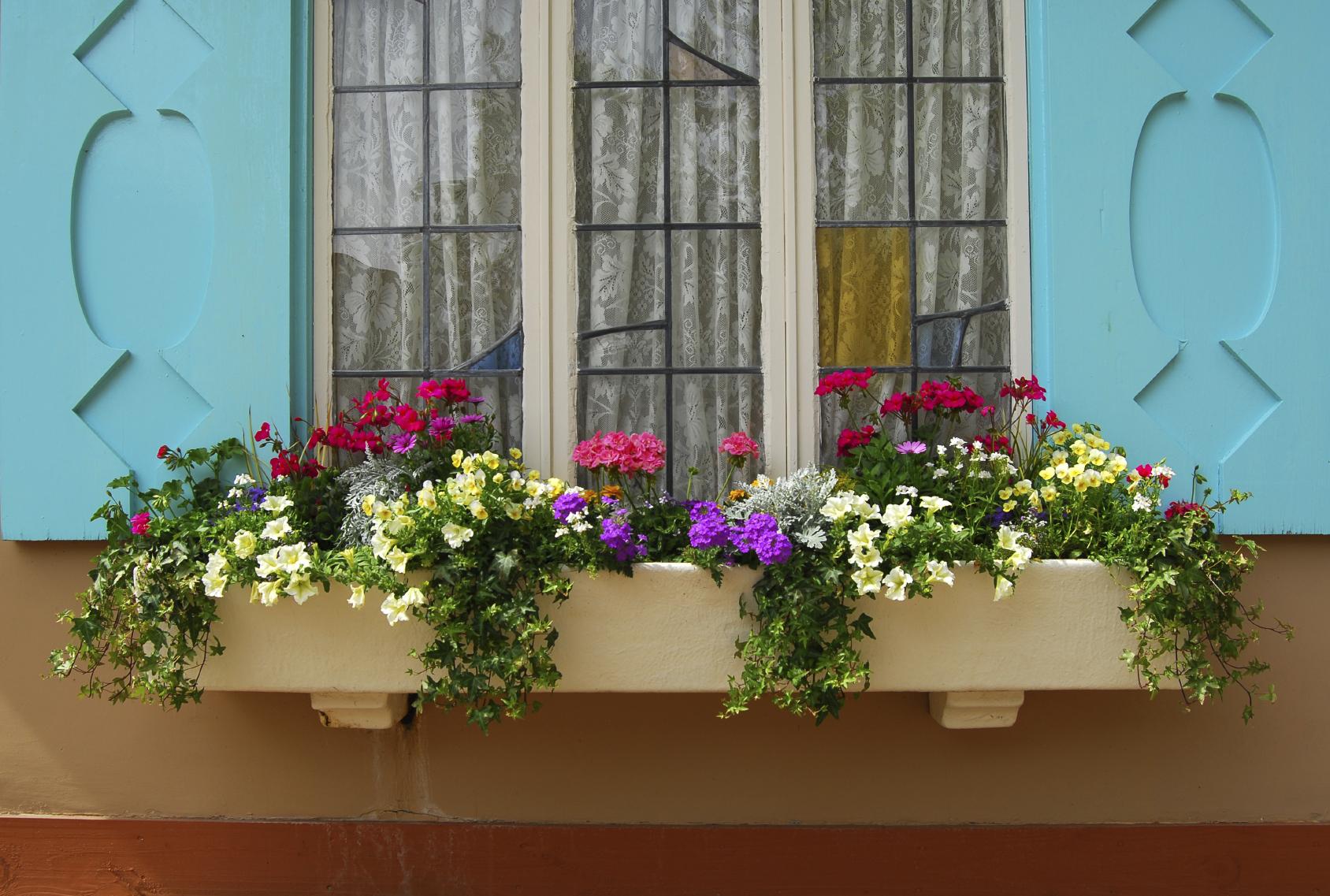 #643C23 Window boxes' jardines en tu ventana Univision 610 Janelas En Vidros