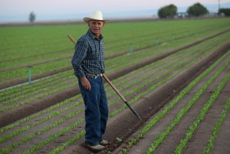 Un trabajador mexicano en Estados Unidos.