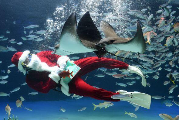 Lo vemos nadando tan alegre entre tantos diferentes tipos de peces, que...