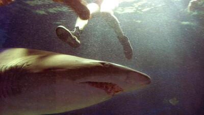 Tiburón ataca a niño en playa de Florida