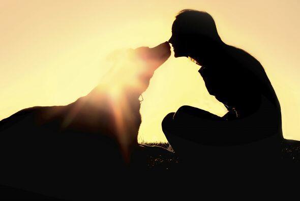 Todos los perros son amorosos, pero algunos se desviven por llenarte  de...