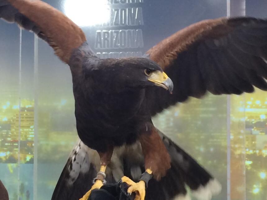 ¡El Zoológico de San Diego visita Univisión Arizona!