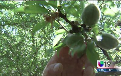 La lluvia podría reactivar la agricultura en California