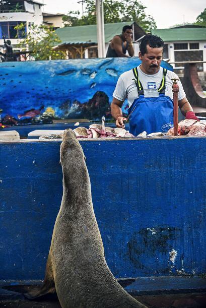 León marino recibe ayuda de un generoso amigo