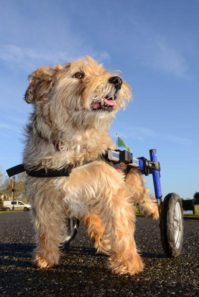 Chester es un perrito de 12 años, que después de una cirugía el año pasa...