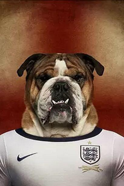 Inglaterra - Bulldog Inglés     Fuente: lifeonwhite.com