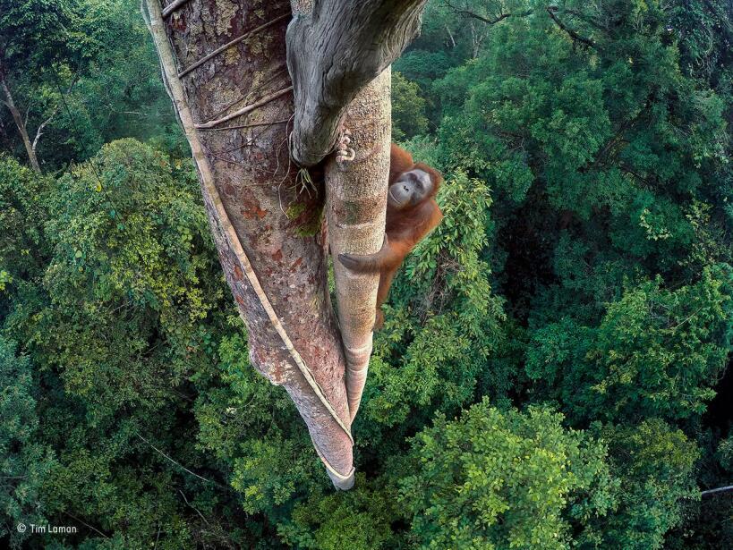 Arte verde para sanar la urbanización © Tim Laman_Wildlife Photographer...