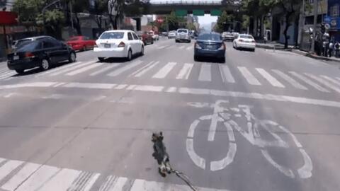 Una ciclista desafió los autos y salvó a un perro que corría a toda velo...