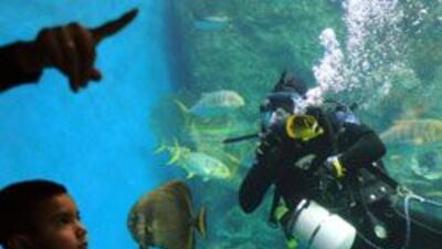 La hispana Milena Acosta lleva acuario movil a las escuelas de Californi...
