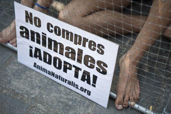 Entre los datos que brindó la organización activista AnimaNaturalis figu...