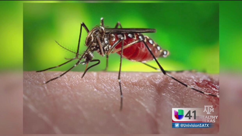 Consejos para detectar el virus del Zika