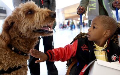 Aprovecha la jornada de adopción de mascotas en el Pasadena Humane Society