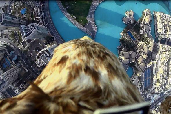 ¡Organizaron un increíble video con ayuda de un águila!
