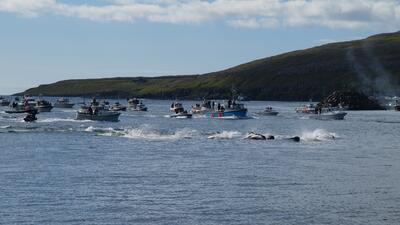 La matanza de ballenas en Dinamarca que reta con su rojo intenso a los ambientalistas del mundo