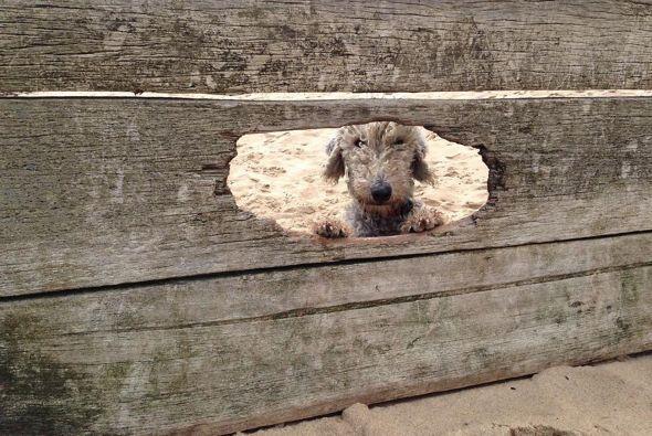 ¿Un perro 'cool'? ¡Este lo es!