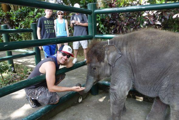 También alimentó a un pequeño elefantito.