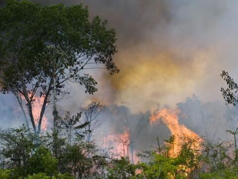 El problema de la deforestación en la selva amazónica de B...