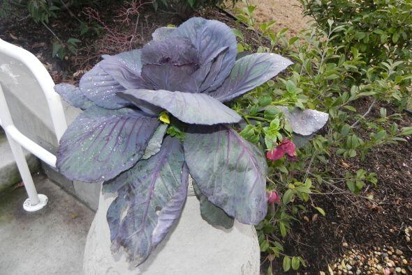 Abundan las flores y detalles en el jardín de Target House.  Conviértete...