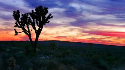 Amanece en el desierto de Mojave, en el sur de California