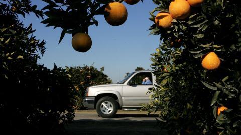 Al menos ocho negocios dedicados a la agricultura en Fresno, en el valle...