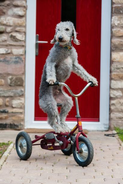 ¡Y, desde ahí, él es fanático de las ruedas!