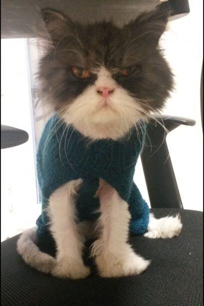 El veterinario de la clínica decidió adoptarlo y hacerse c...
