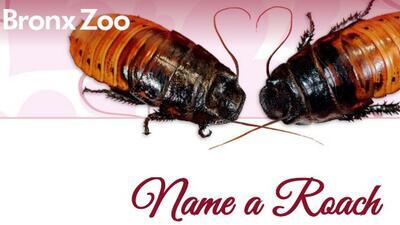 Nombra una cucaracha