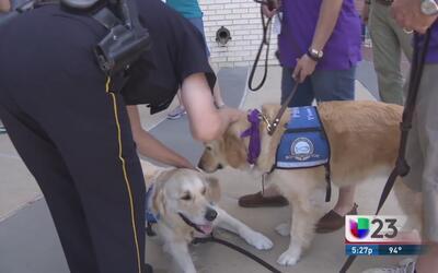 Perros de Chicago llegan a Dallas a confortar