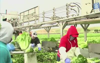 Temor entre los inmigrantes que vienen a trabajar como campesinos a Esta...