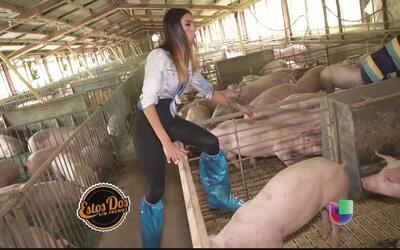 Patricia Corcino regresó a los tiempos en la granja
